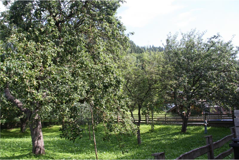 boomgaard direct grenzend aan achtertuin