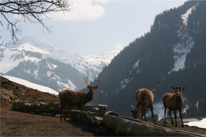 Prachtig vergezicht Wildpark Aurach