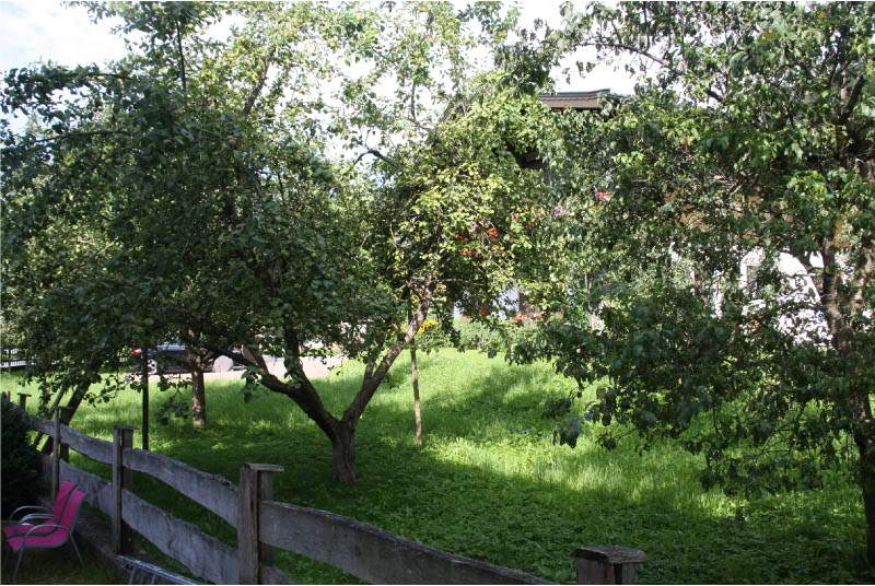 itzicht vanuit de achtertuin op de boomgaard van de buren